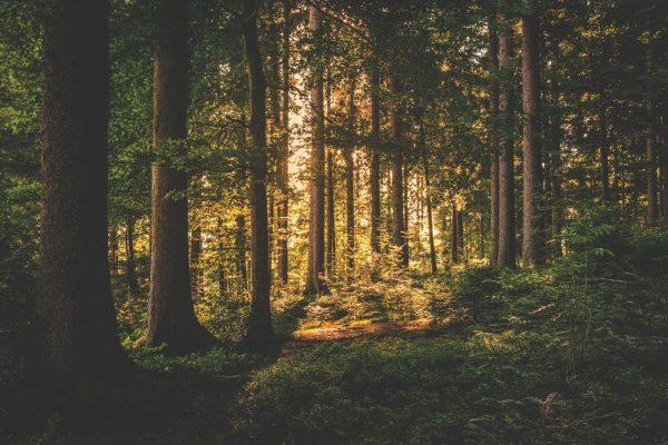 Ebersberger Forst